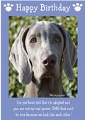 "Weimaraner-Happy Birthday - ""I'm Adopted"" Theme"